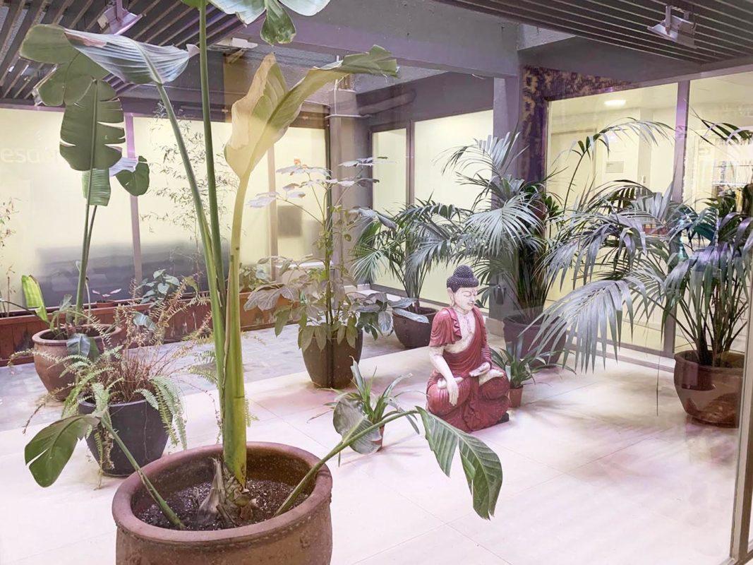patio o jardín del proyecto interiorismo centro wellness dr Serrano en Valencia