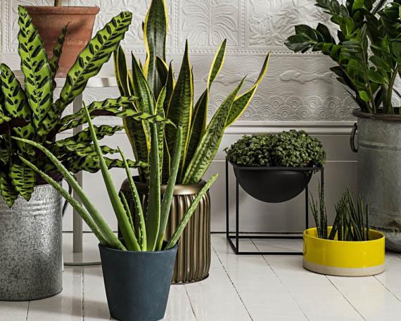 Macetas de plantas de diseño para terraza