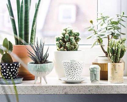 Plantas decoracion terraza