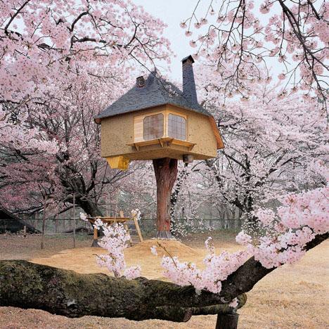 casa en el arbol con flores violetas de primavera