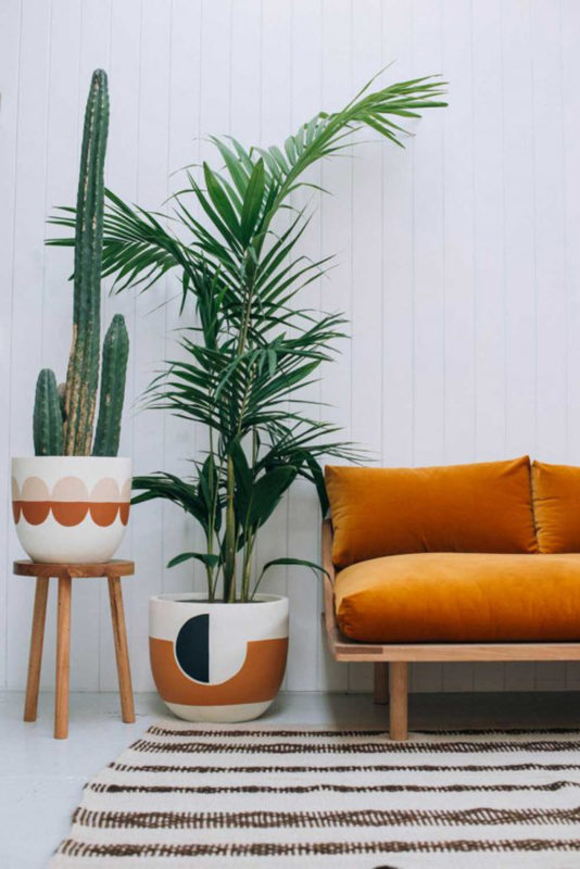 sofa marron con plantas de interior